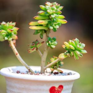 Riego y abonado de cactus y suculentas