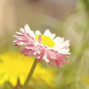 Flowers—Mito enjoy