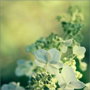 唯美的鲜花图片欣赏