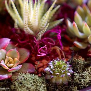Cambio de maceta o trasplante de cactus y otras suculentas