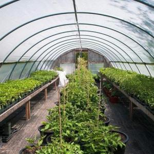 What Can I Grow in a Greenhouse in Winter?