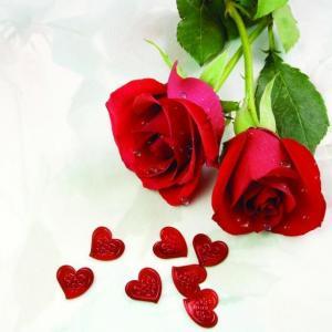 这可能是最好用的玫瑰养护知识了!