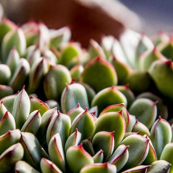 Pictures of Cacti and Succulents(1/2)