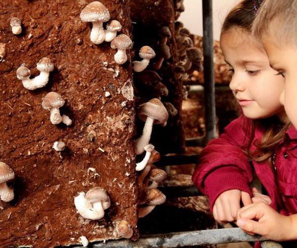 Cómo cultivar setas en nuestra propia casa