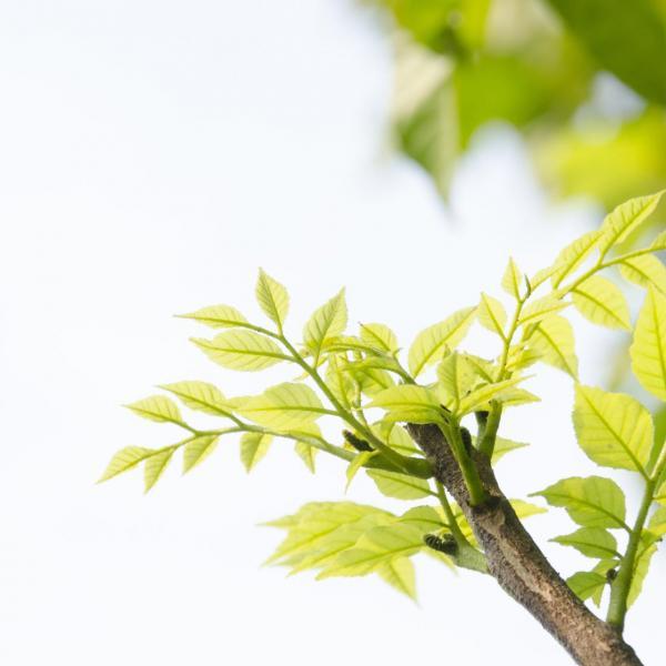 唯美的郁郁葱葱的绿叶图片欣赏