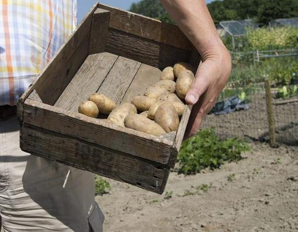 The Best Vegetables to Grow in Missouri