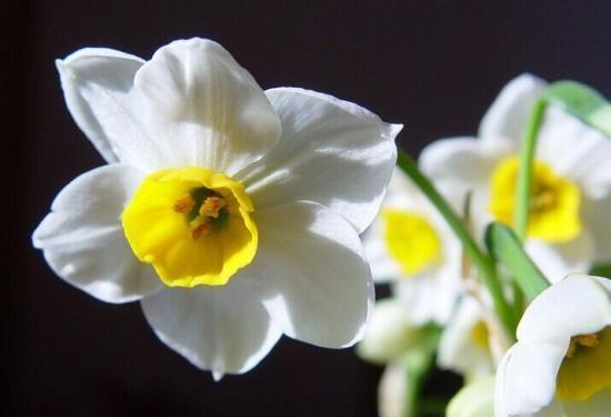 水仙花的三种养殖方法