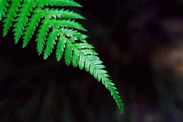 Green ferns—Mito enjoy