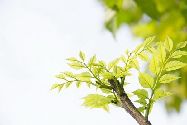 Green leaf—Mito enjoy
