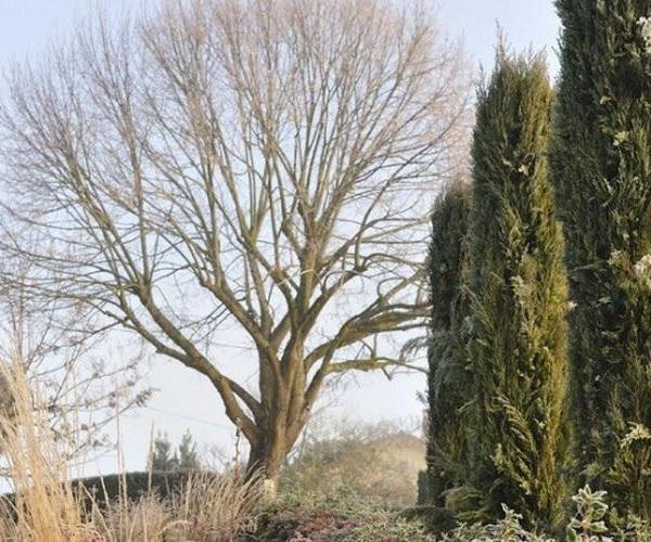 Los árboles caducifolios y el invierno