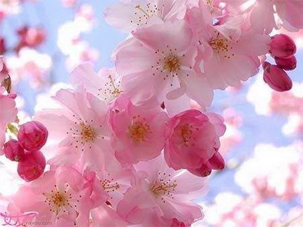 植物真的能带给你桃花运吗?