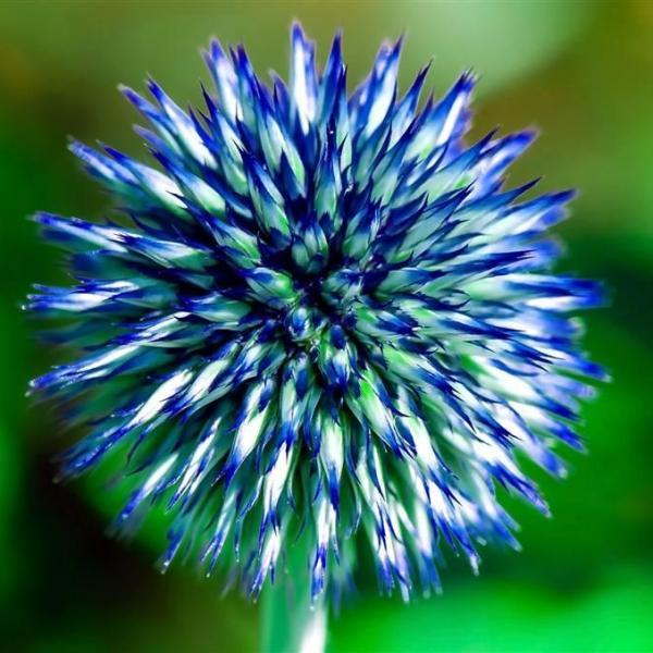 8个简单技巧拍出不一样的花卉照片