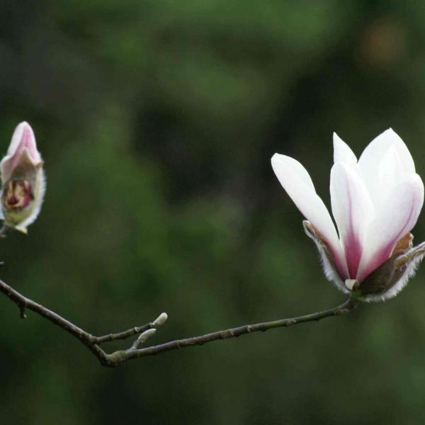 用对比手法突出花卉的存在感