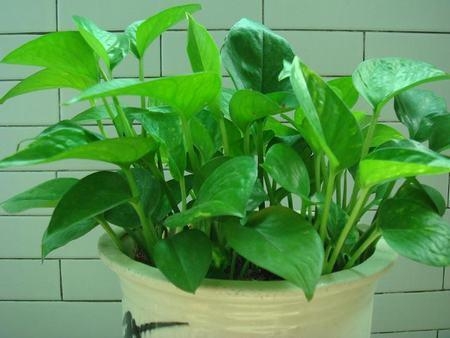 Avoid These 9 Mistakes & Your Indoor Plants Won't Die Again
