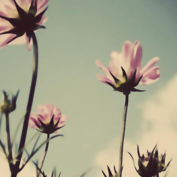花卉摄影景深的运用与控制