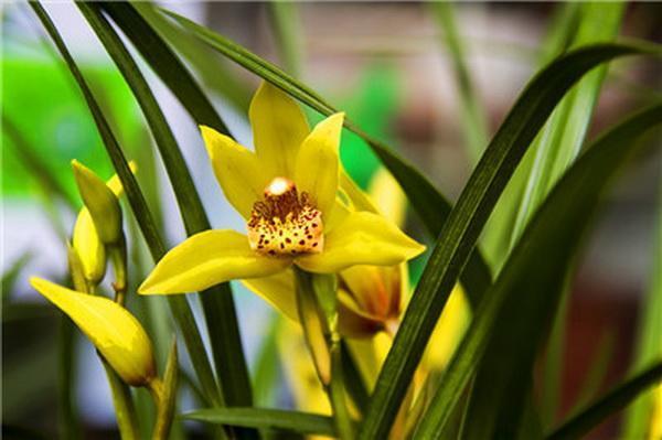 春季已到,来学习一下兰花的养护小技巧吧。
