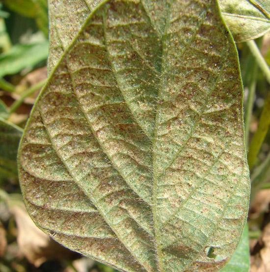 What Are Two-Spotted Spider Mites – Two-Spotted Mite Damage And Control