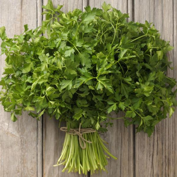 Parsley Harvesting: Learn How And When To Pick Parsley Herbs