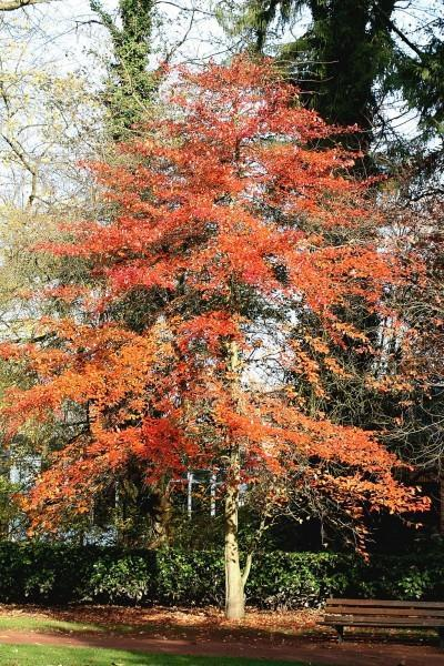 Tupelo Tree Care: Learn About Tupelo Tree Growing Conditions