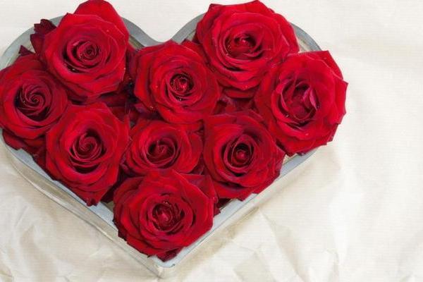 Red rose—Mito enjoy