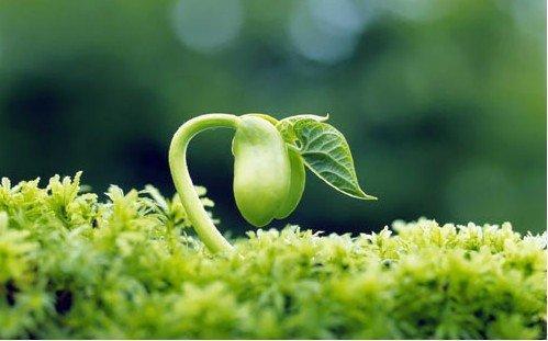 How to grow Cardamom | Growing Cardamom (Elaichi)