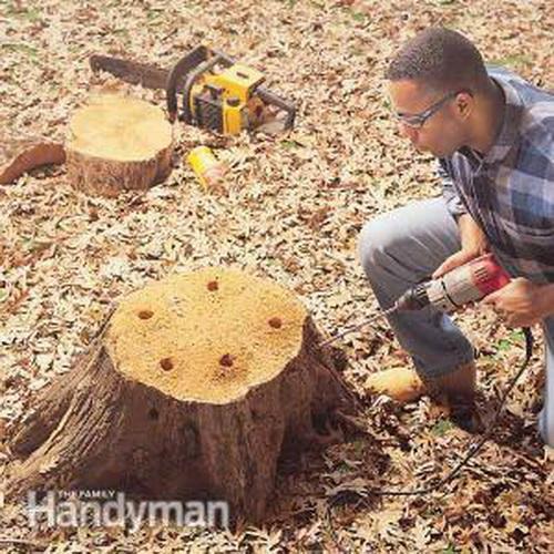 Cómo eliminar el tocón de un árbol sin esfuerzo