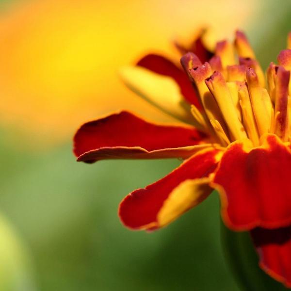 9招花卉拍摄技巧