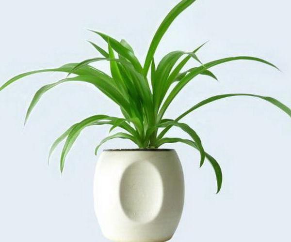不可不知的植物摆放禁忌