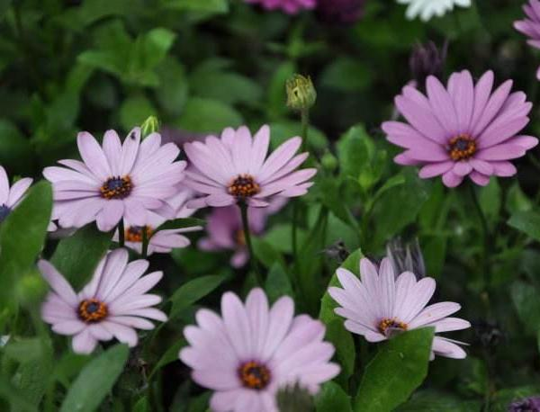 5 Easy to Grow Flowers Even You Can't Kill!