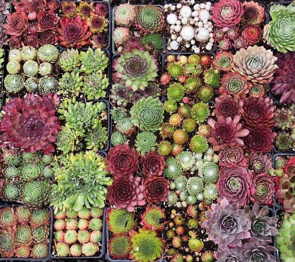 Succulent Plant Info: Learn About Types Of Succulents And How They Grow