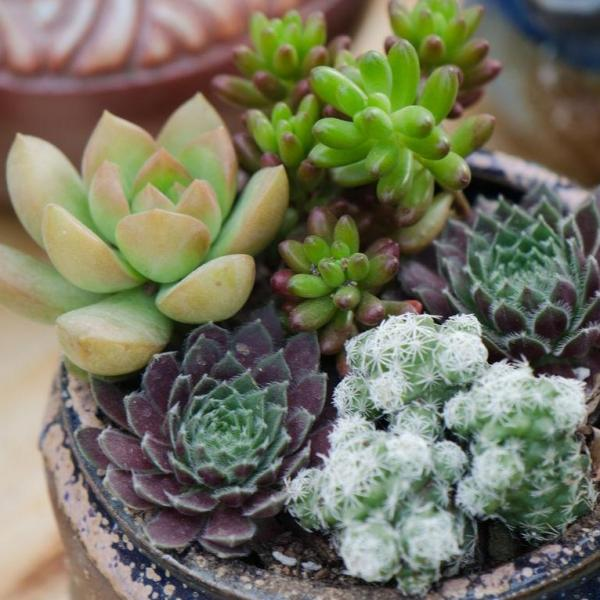 How to Choose and Grow Succulents(2/3)