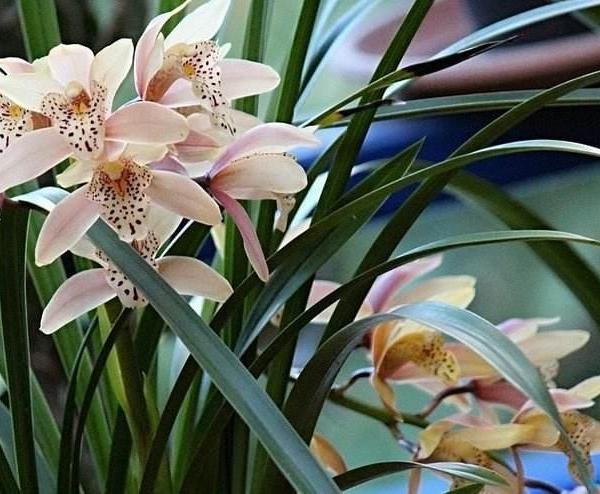 花卉摄影之逆光表现花卉