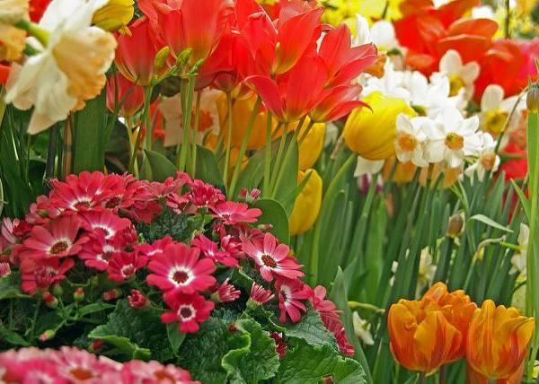 Bulb Crazy: Plan A Spring Bulb Garden Now