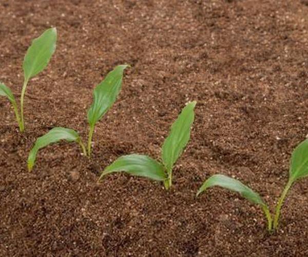 Componentes primarios de los suelos: materia inorgánica, materia orgánica, gases, líquidos.