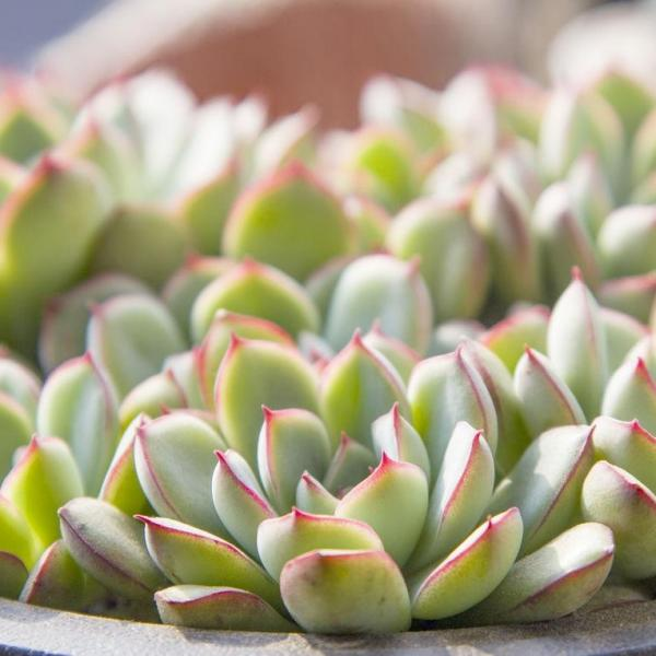 How to Choose and Grow Succulents(3/3)