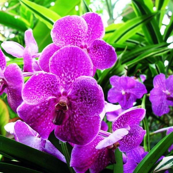 花卉摄影如何用光