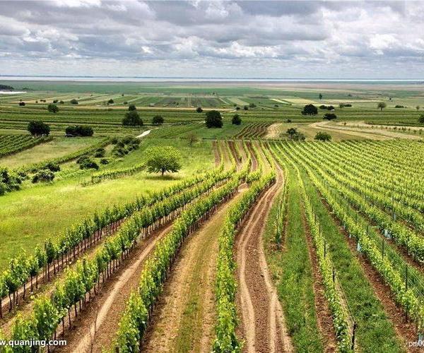Características de los primeros cultivos, las primeras herramientas, la agricultura itinerante.