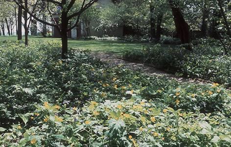 How to Grow a Wildflower Garden