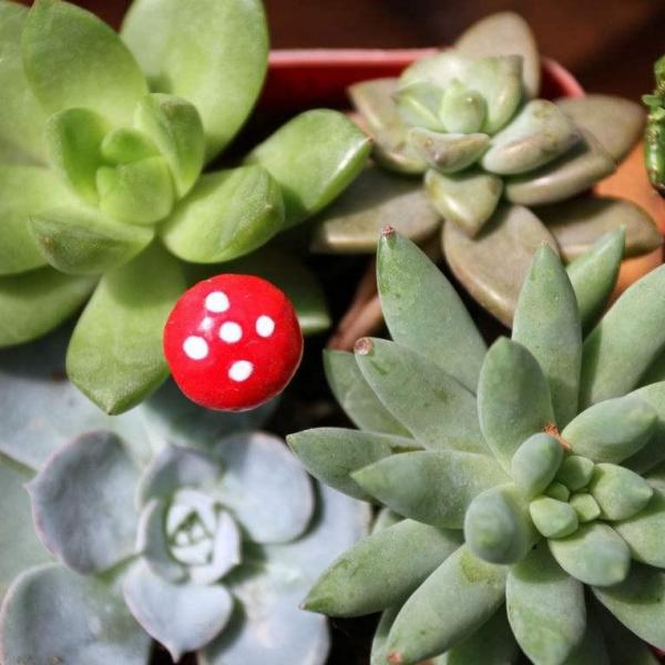 10 Unusual Succulent Plants for Your Garden(2/2)