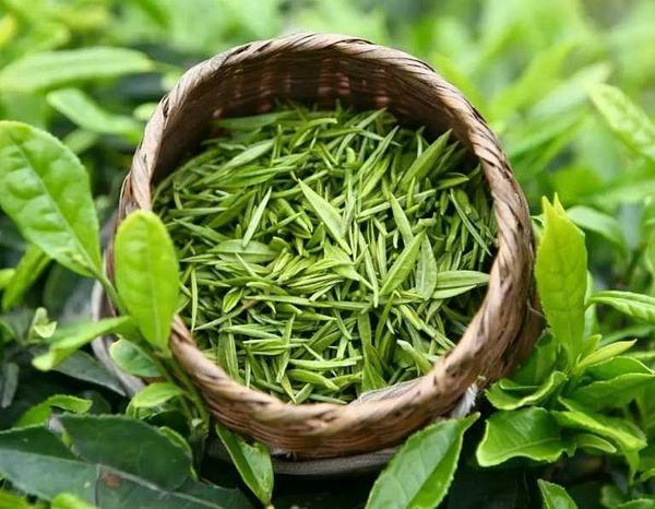 绿茶品种,原来它们也属于绿茶的一种!