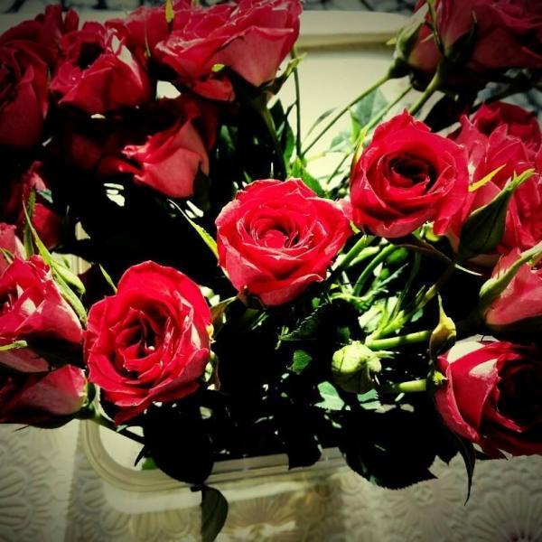 玫瑰和月季的区别(图文)