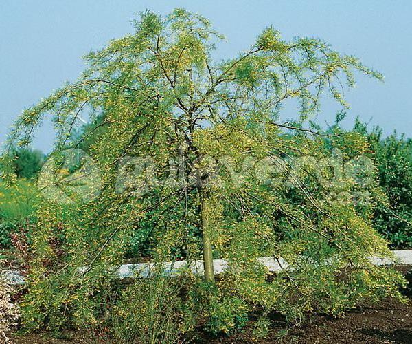 Las especies de arbustos y su reproducción