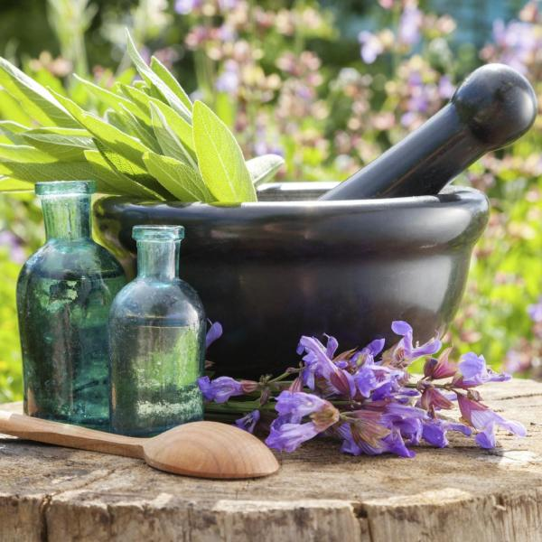 Healing Herb Plants – Tips On Growing A Medicinal Herb Garden
