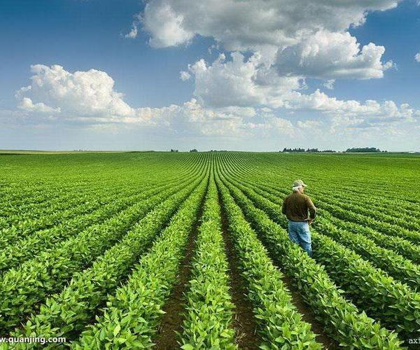 Roma (continuación): literatura agrícola. Mesopotamia: organización social.