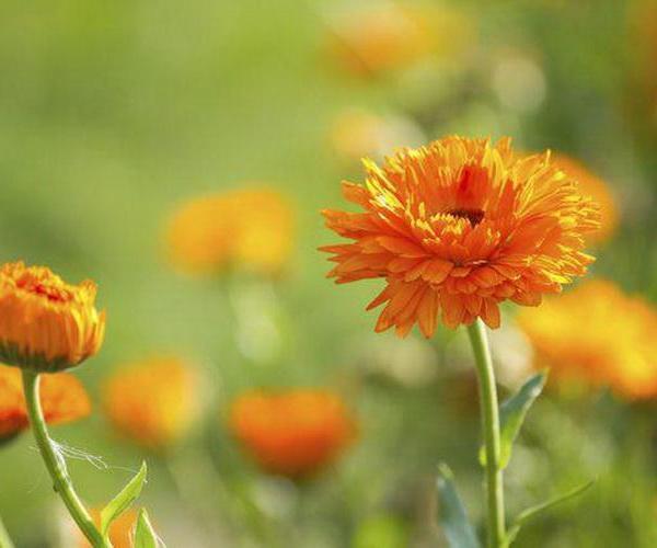 2. Siembra de anuales en semillero