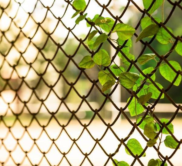 小清新绿色爬山虎图片