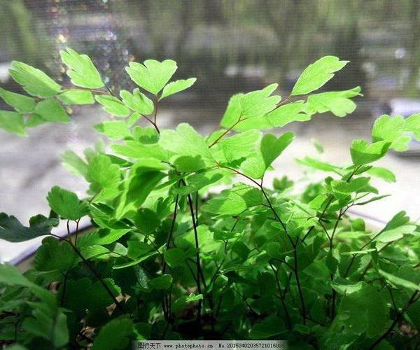 既助运又旺财的常见植物,最适合家庭养殖。
