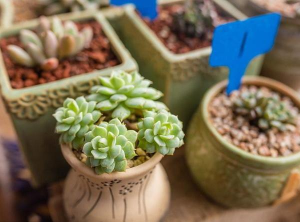 Learn How to Grow and Care for Succulents(2/2)