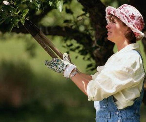 La poda de los árboles frutales