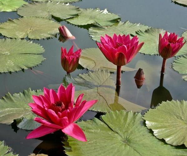 Reproducción de plantas acuáticas